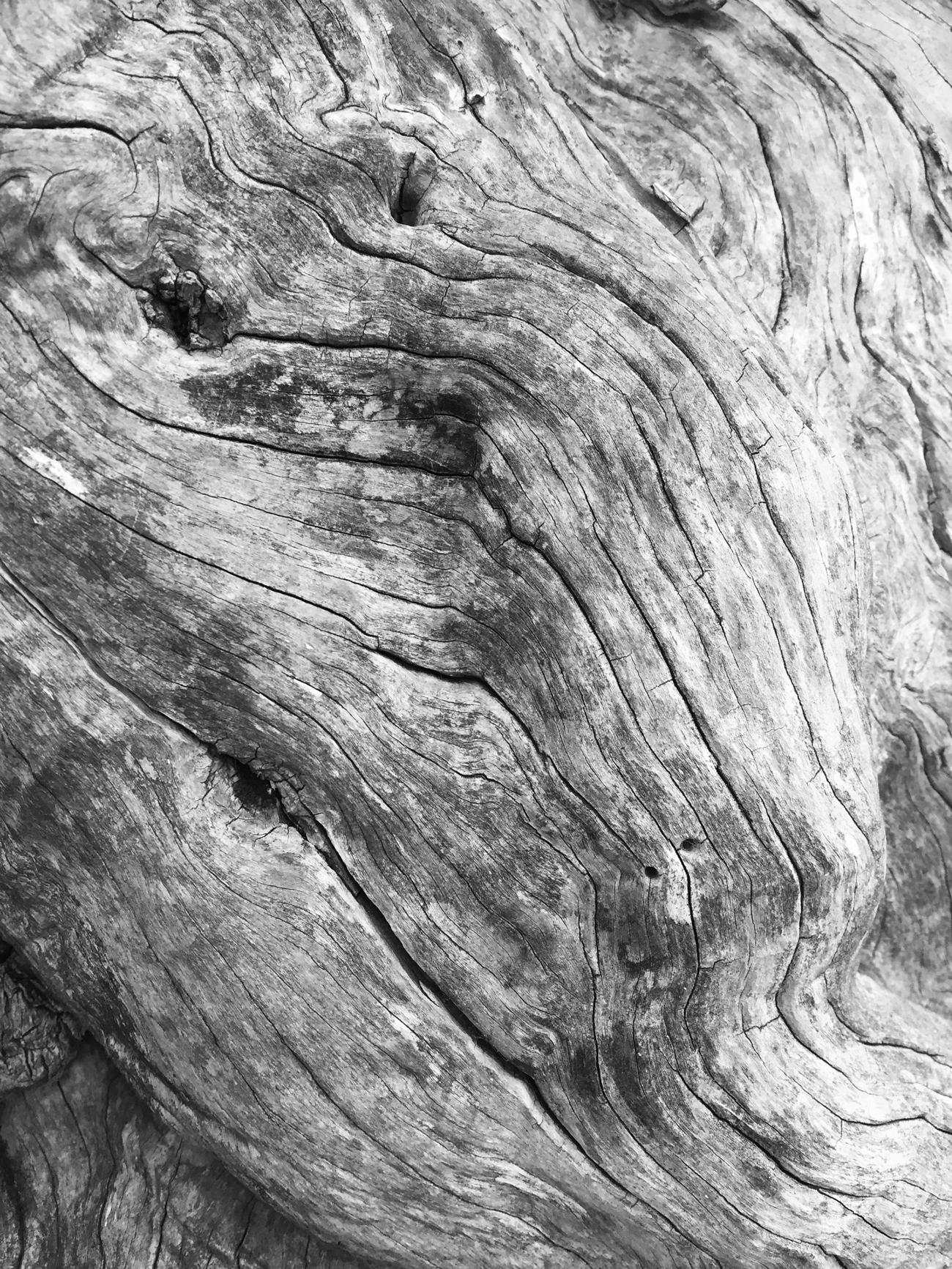 Doctum Doces Olive Tree Bark Front Page Bracelets