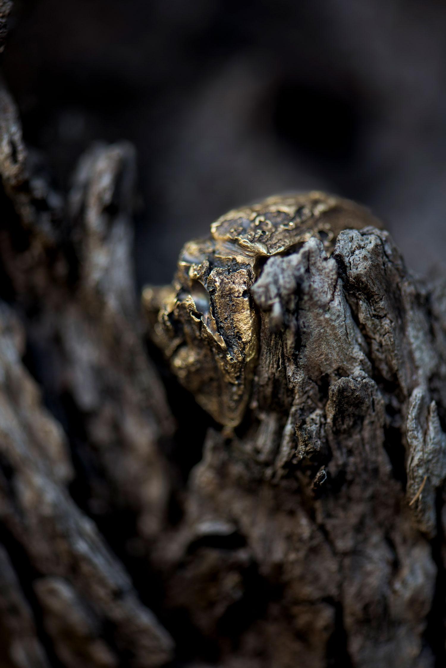 Doctum Doces Bark Ring Still Life Puglia Ann Casarin