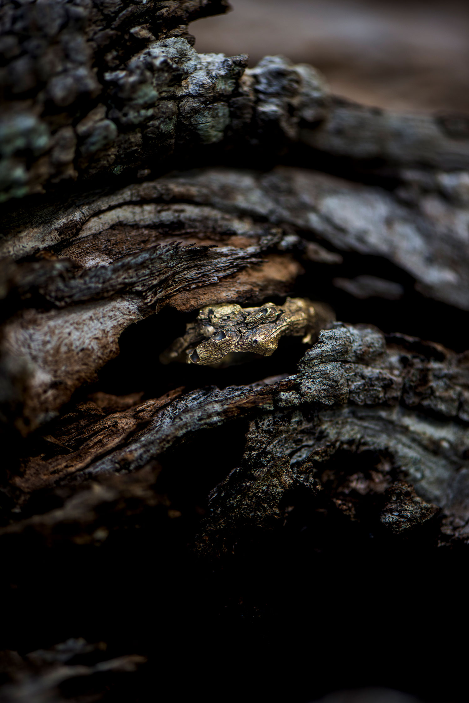 Bark-2 Doctum Doces Brass ring still life Puglia