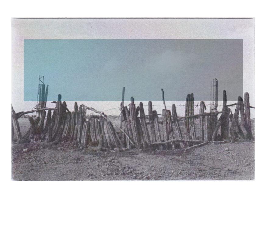 jeppirachi postcard1 Cactus and blue